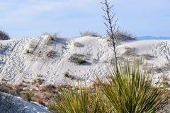 Amazing White Sands Desert in New Mexico, USA. Great wave-like dunes of gypsum sand have created the world's largest gypsum dunefield royalty free stock images