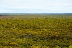 Great Western Waldland stockfoto