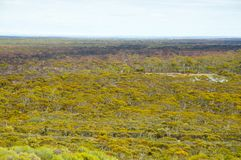 Great Western Waldland stockbild