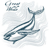 Great Whale Stock Photo