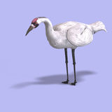 Great White Crane Royalty Free Stock Image
