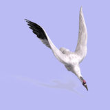 Great White Crane Royalty Free Stock Photos