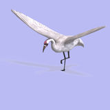 Great White Crane Royalty Free Stock Image