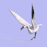 Great White Crane Royalty Free Stock Images