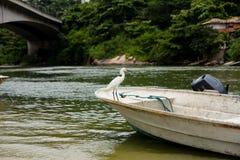 Great white egret perched on white boat in the background, Marapendi Lagoon, Rio de Janeiro.  stock images