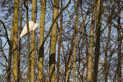 Great white egret between trees in warm sunlight Royalty Free Stock Photo