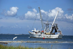 Great white heron flies by a shrimping boat as it heads out Stock Photo