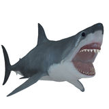 Great White Open Jaws Royalty Free Stock Photography