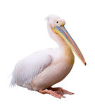 Great white pelican cutout. Great white pelican (Pelecanus onocrotalus) isolated over white background. Pelican is ancient symbol of maternal love. Clipping path Stock Photo