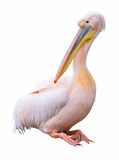 Great white pelican cutout. Great white pelican (Pelecanus onocrotalus) isolated on white background. Pelican is ancient symbol of maternal love. Clipping path Royalty Free Stock Photos