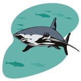 Great white shark. Vector art of a Great white shark vector illustration