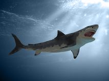 Great White Shark Attack. 3D render of a great white shark attacking with digital painting Stock Photo