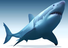 Great White Shark. (Carcharodon carcharias) - Illustration, Vector Royalty Free Stock Image