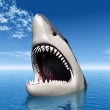 Great White Shark Royalty Free Stock Image