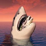 Great White Shark Eating Stock Images
