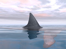 Great White Shark Fin Stock Photos