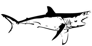 Great white shark fish I. vector. An aggressive saltwater predatory cartilaginous fish found in coastal waters in all major oceans Royalty Free Stock Images