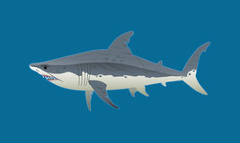 Great white shark illustration. A scarred great white shark swims into the ocean Stock Photography