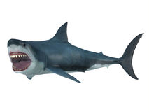 Great White Shark Left Turn Stock Photo