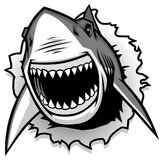 Great White Shark ripping with opened mouth. Vector of Great White Shark ripping with opened mouth Stock Images