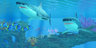 Great White Shark Shoal stock photos