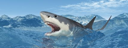Great white shark in the stormy sea Stock Images