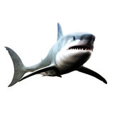 Great white shark swimming. On a white background Royalty Free Stock Photos