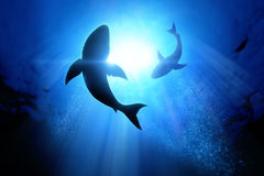 Great White Sharks. Under the waves circle two great white sharks Royalty Free Stock Photos