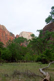 Great White Throne, Zion National Park, Utah Royalty Free Stock Image