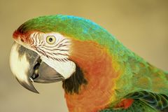 Greatparrot stock image