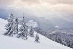 Great winter photo in Carpathian mountains with snow covered fir trees. Colorful outdoor scene, Happy New Year. Celebration concept. Artistic style post royalty free stock images