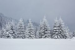 Great winter photo in Carpathian mountains with snow covered fir trees. Colorful outdoor scene, Happy New Year. Celebration concept. Artistic style post stock photos