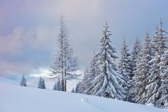 Great winter photo in Carpathian mountains with snow covered fir trees. Colorful outdoor scene, Happy New Year. Celebration concept. Artistic style post stock photo