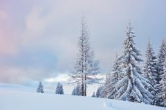 Great winter photo in Carpathian mountains with snow covered fir trees. Colorful outdoor scene, Happy New Year. Celebration concept. Artistic style post stock images