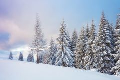 Great winter photo in Carpathian mountains with snow covered fir trees. Colorful outdoor scene, Happy New Year. Celebration concept. Artistic style post royalty free stock image