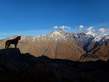 Greater Caucasus landscape with Dog royalty free stock photography