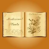 Greater celandine. Botanical illustration. Medical plants. Book herbalist. Old open book Royalty Free Stock Images