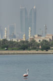 Greater Flamingo with financial harbour of bahrain in the backdrop Stock Photos