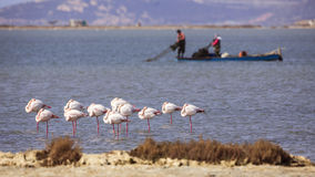 Greater Flamingos and Fishermen Stock Photos