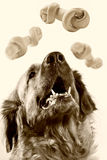 Greater friendly trained dog Royalty Free Stock Image