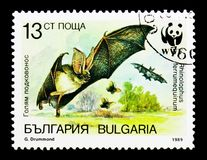 Greater Horseshoe Bat Rhinolophus ferrumequinum, WWF Bats serie, circa 1989. MOSCOW, RUSSIA - DECEMBER 21, 2017: A stamp printed in Bulgaria shows Greater Royalty Free Stock Image
