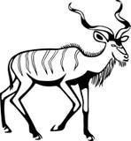 Greater Kudu stock illustration