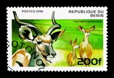 Greater Kudu (Tragelaphus strepsiceros), Ungulates serie, circa. MOSCOW, RUSSIA - MARCH 18, 2018: A stamp printed in Benin shows Greater Kudu (Tragelaphus royalty free stock photos