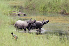 Greater One-horned Rhinoceros at Bardia national park, Nepal Royalty Free Stock Photos