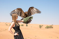 Greater spotted eagle during a desert falconry show in Dubai, UAE. Royalty Free Stock Photos