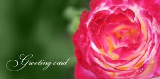 Greating karta z różą Zdjęcia Stock