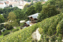 Grebovka wineyard在布拉格 图库摄影