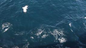 Grecia mayo de 2014: Isla de Thasos almacen de metraje de vídeo