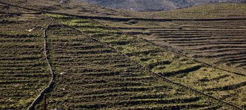 Grecja Kea wyspa Skalisty krajobraz w wiośnie zdjęcie stock