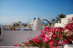 Grecja - kwiaty Zdjęcia Royalty Free